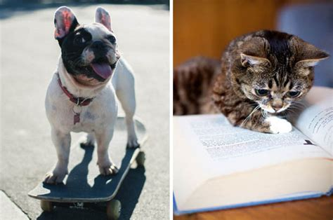 dogs doing human things reading cats skateboarding dogs surfing pigs and driving hedgehogs 8 human animals