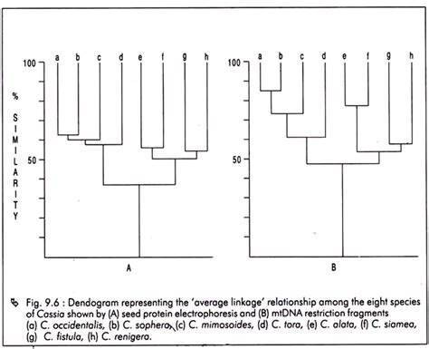 Plant Taxonomy Research Papers by Numerical Taxonomy Meaning Merits And Demerits