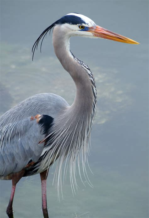 Ecological Inventory Cortes Children S Forest Trust Blue Heron