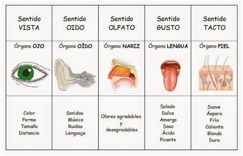 imagenes de organos sensoriales cuadros comparativos de los 243 rganos de los sentidos para