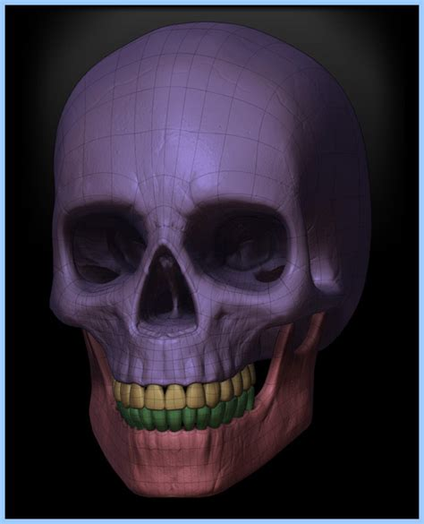 zbrush tutorial skull free zbrush models human male and skull by digital 3d models