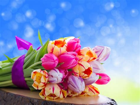 beautiful flowers images gallery 7 flowers