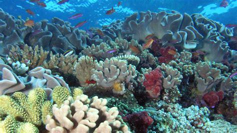 nasa tests observing capability  hawaiis coral reefs