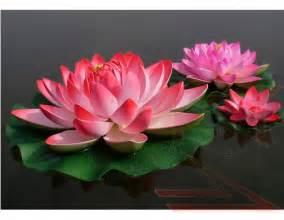 Buy Lotus Flower Tnt Sales Sky Lanterns Lotus Flower