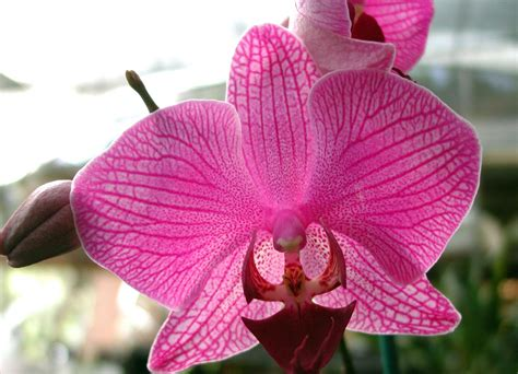 imagenes de flores hermosas orquideas fotos de orqu 237 deas orqu 237 deas