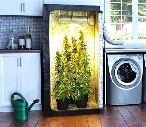 essential tips  growing indoors  winter legalize