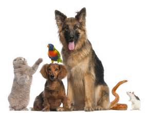 take care of your loved ones the benefits of a pet