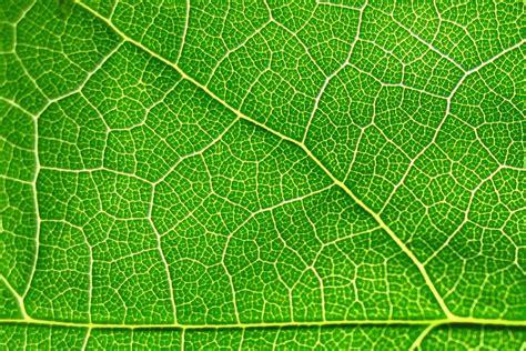 texture leaf pattern leaf texture background image