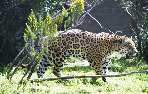 amazing wild life   find  salvador zoo brazil  places boomsbeat