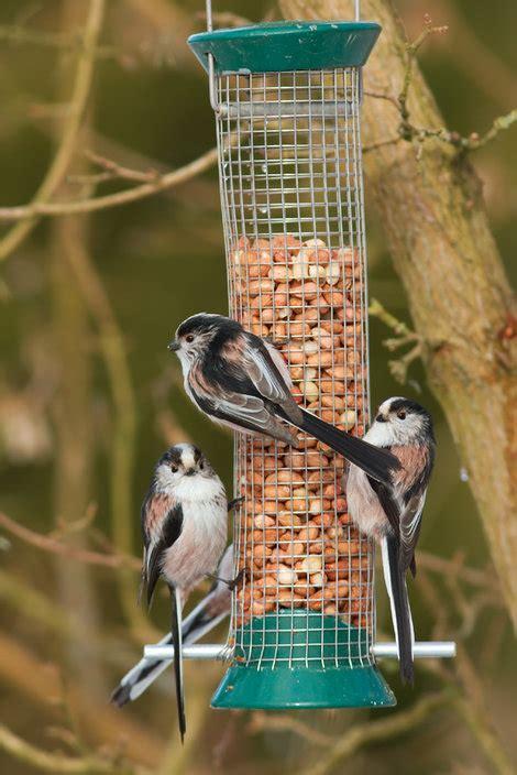 how to look after the garden birds hayes garden world