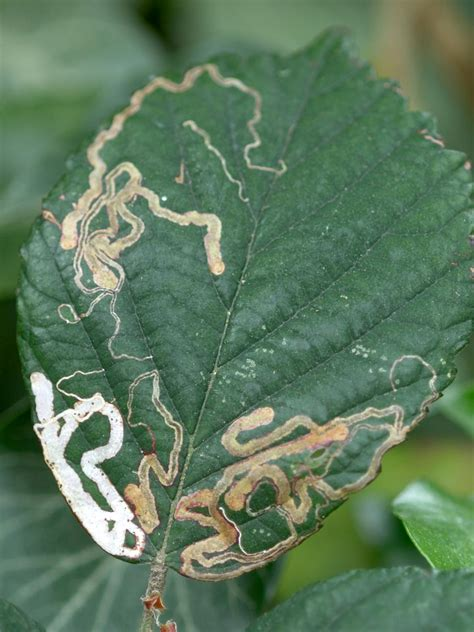 common garden insect pests 16 common garden pests hgtv