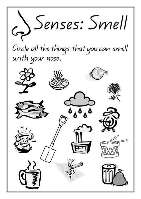 sense of sight worksheets for kindergarten 1000 images