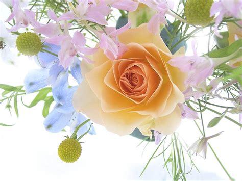 printable beautiful flowers beautiful flowers latest wallpapers