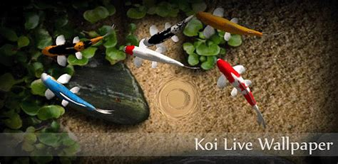 koi free live wallpaper apk nandtech all about tech best live wallpaper for android devices