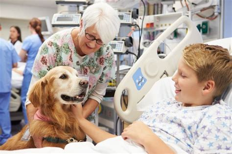 best dogs for therapy best breeds for pet therapy pet care facts
