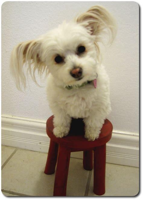 bonnin designs stool white