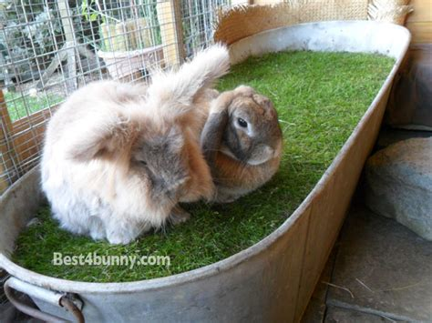 best bedding for rabbits best bedding for rabbits 28 images 25 best ideas about