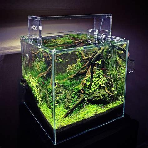 cube aquarium aquascape ada cube garden 30cm 12 quot x12 quot x12 quot aquascape ideas