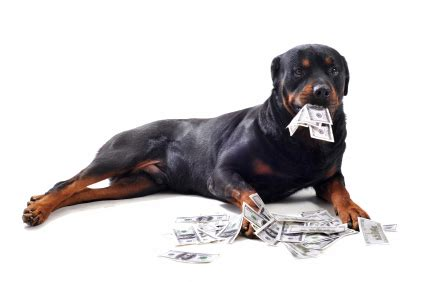 how much is a rottweiler worth damages archives office of heidi meinzer pllc