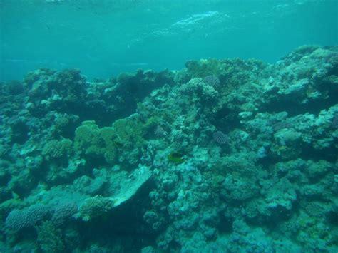 fuji underwater underwater cameras test 2011 fujifilm finepix xp30