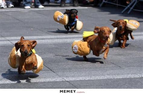 funny hot dog pic hot dog memes funny hot dog pictures memey
