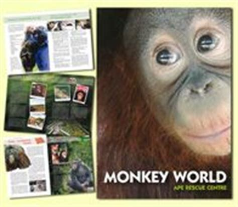rescued ape quartet books 25 best ideas about monkey world on pictures