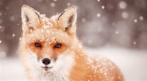 animals in the winter where do the animals go in winter farmers almanac