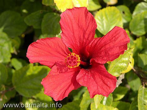 flower design malta flowers in malta flickr photo sharing