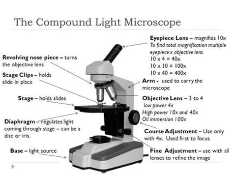 how does a compound light microscope magnify images exercise 2 review of microscope use and care ppt