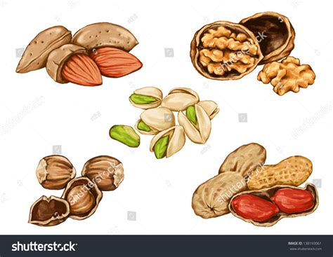 how to make doodle nuts drawing peanuts nuts edible seeds tree stock vector