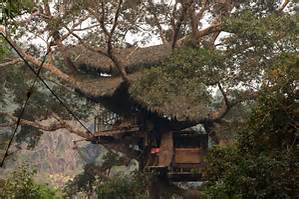 Most Expensive Tree House In The World Image Mag