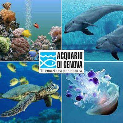 prezzi ingresso acquario di genova acquario di genova primo per variet 224 di specie in europa