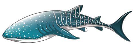 whale shark png clipart best web clipart