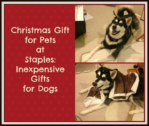 christmas gift for pets at staples inexpensive gifts for