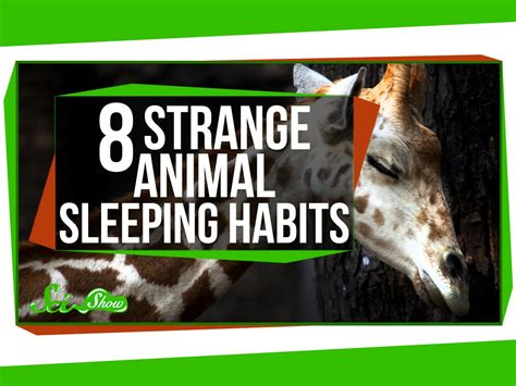 8 Reasons I Animals by 8 Strange Animal Sleeping Habits