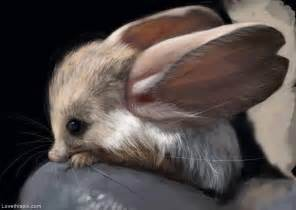 eared jerboa pictures photos and images for