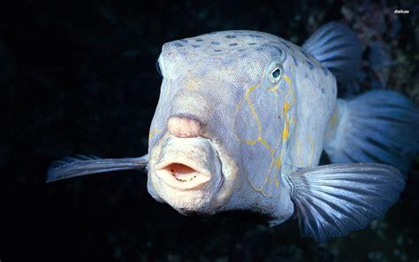 Marilyn Monroe House by Deep Sea Fish