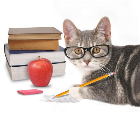 libro the white cat and smart cat writing with books on white stock photo image of cutout kitty 43812948