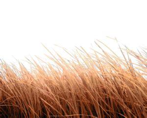 grass png zip   hd grass png vector