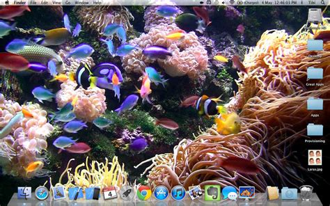 wallpaper aquarium mac desktop aquarium relaxing live wallpaper background on