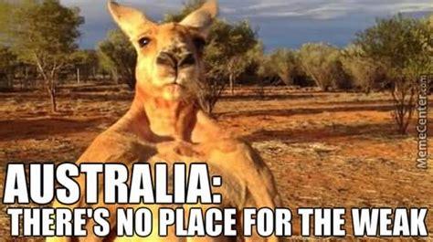 Kangaroo Meme - 15 very funny kangaroo pictures