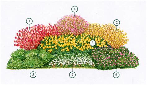 fiori per aiuole invernali giardini