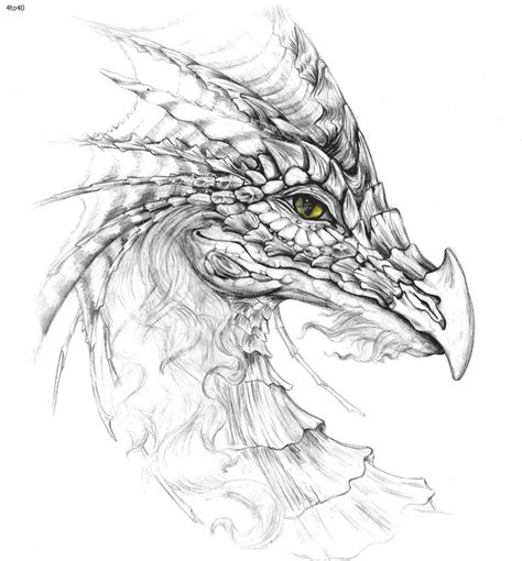 coloring pages of dragon faces 108 best coloring pages dragons images on pinterest
