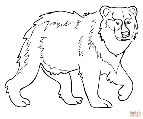 eurasian brown bear coloring page free printable