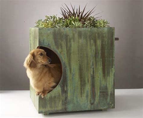 green dog house does your dog house have a green roof dog milk