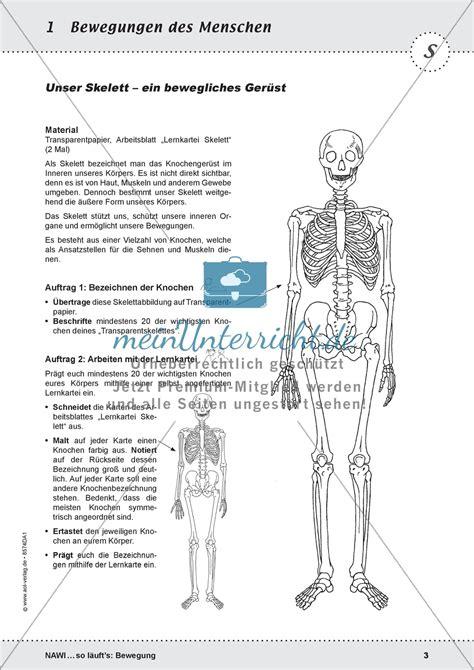Das Skelett Arbeitsblatt