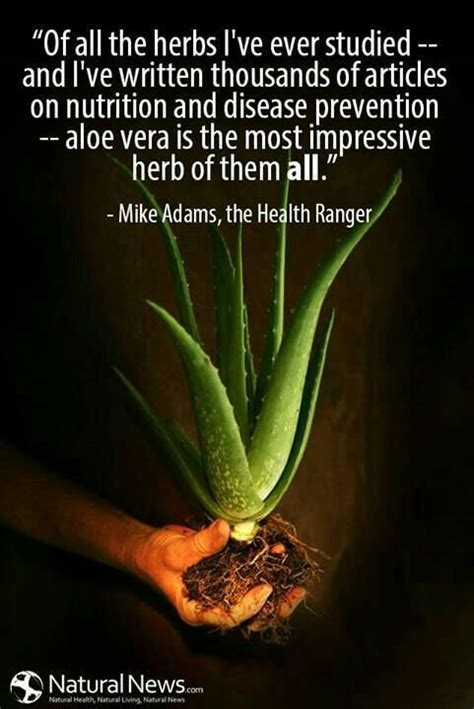 aloe vera plant diseases aloe vera aloe and year on