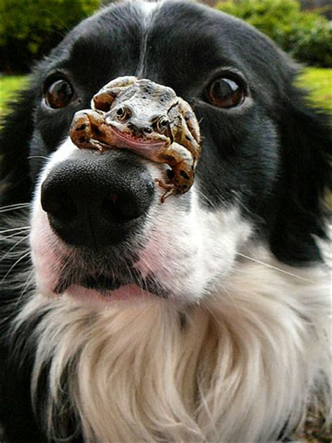 frogs and dogs and frog flickr photo