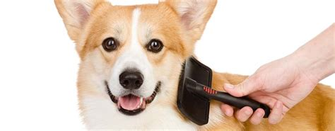 puppy brush best brush 2018 review of 10 grooming brushes for dogs