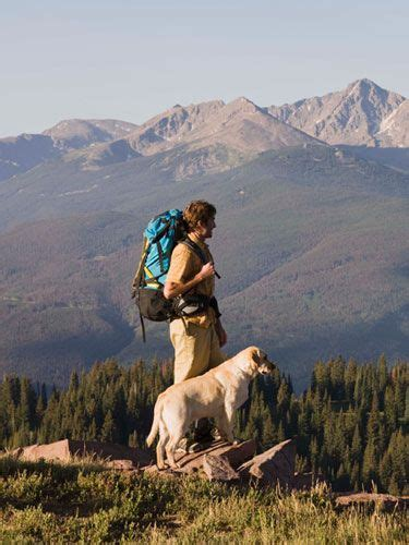 traveling with dogs 17 best ideas about traveling with pets on traveling with dogs pets and